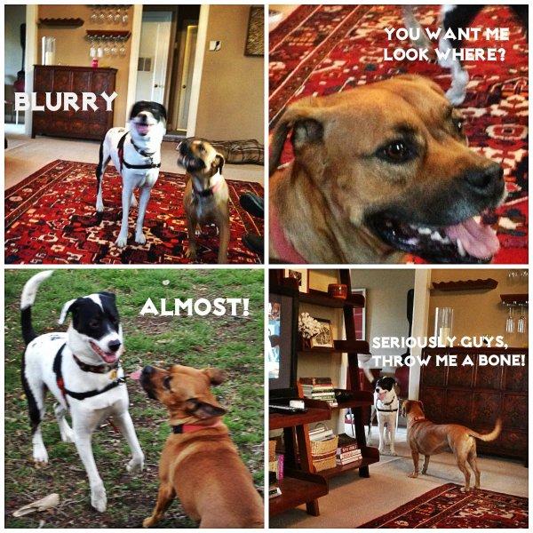 bad dog collage